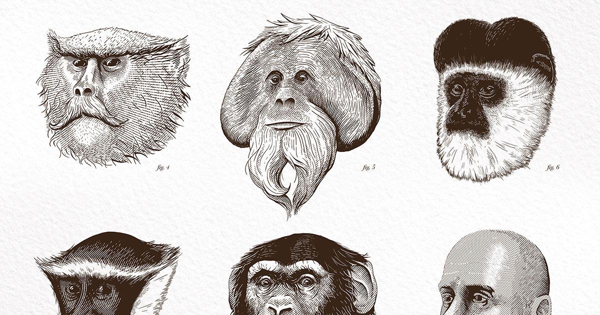 Bearded Monkey Name: Poster Illustration